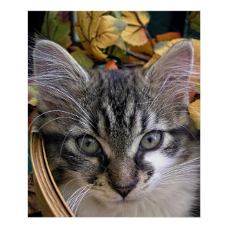 Gatito de Halloween, gato del gatito del bebé, vac Impresiones