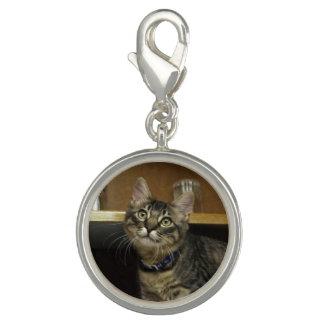 Gatito de Kimber en el encanto del armario Dije Con Foto