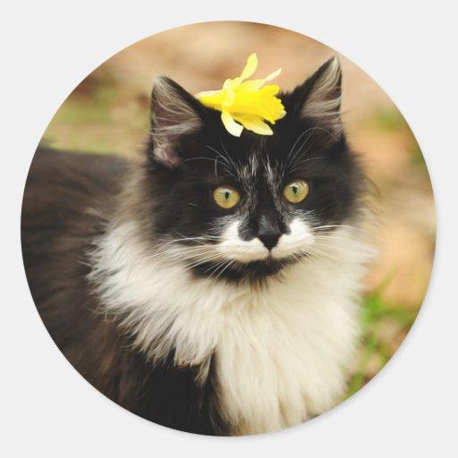 Gatito de la flor etiquetas redondas