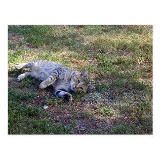 gatito de la Isla de Man del tabby en hierba Postales