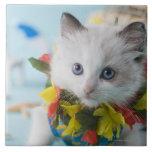 Gatito de la muñeca de trapo y vacaciones de azulejo cuadrado grande