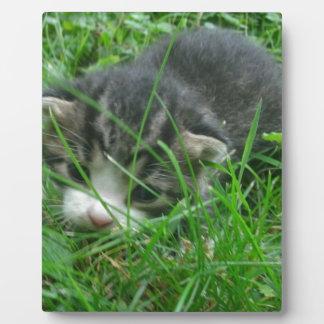 Gatito de la selva placa de plastico