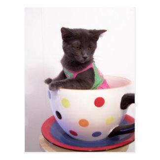gatito de los arys tarjetas postales