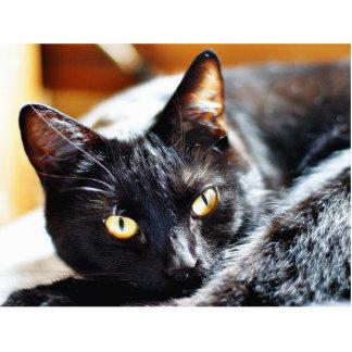 Gatito de los gatitos de los gatos esculturas fotograficas