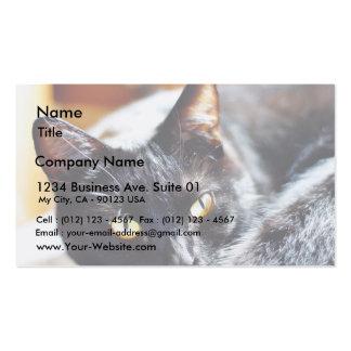 Gatito de los gatitos de los gatos tarjeta de visita