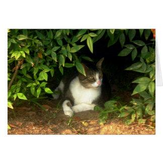 Gatito de Ninja que oculta en los arbustos Felicitación