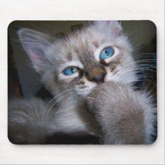 Gatito de ojos azules Mousepad del pensador intros