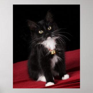 Gatito de pelo corto negro y blanco, 2 meses del 1 póster