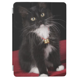 Gatito de pelo corto negro y blanco, 2 meses del cover de iPad air
