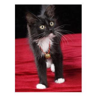 Gatito de pelo corto negro y blanco, 2 meses del postal