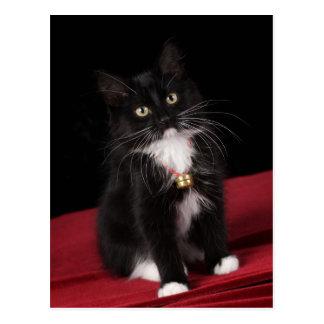 Gatito de pelo corto negro y blanco, 2 meses del postales