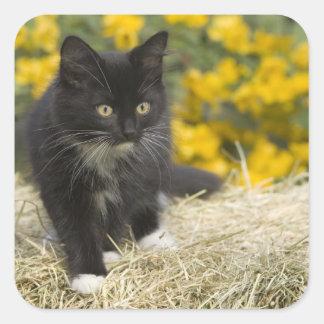 Gatito de pelo corto negro y blanco en la bala de pegatina cuadrada