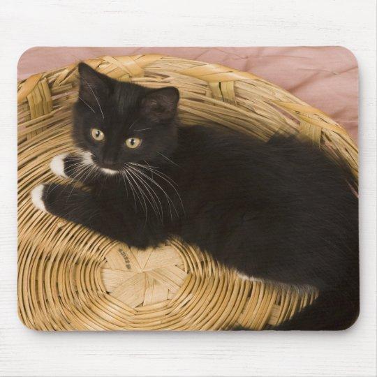 Gatito de pelo corto negro y blanco en la tapa del alfombrilla de ratón