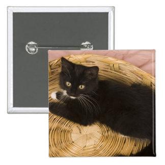 Gatito de pelo corto negro y blanco en la tapa del pin cuadrado