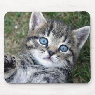 Gatito de plata de ojos azules adorable Mousepad d Tapete De Ratones