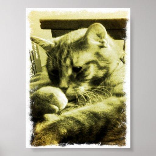gatito de reclinación impresiones