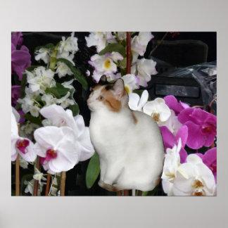 Gatito del calicó con las orquídeas póster