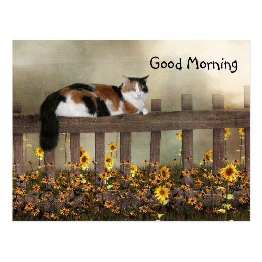 Gatito del calicó de la buena mañana tarjetas postales