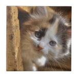Gatito del calicó del Heterochromia Azulejos Cerámicos