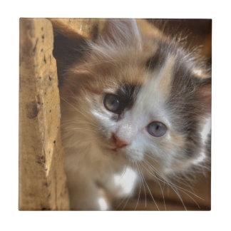 Gatito del calicó del Heterochromia Azulejo Cuadrado Pequeño
