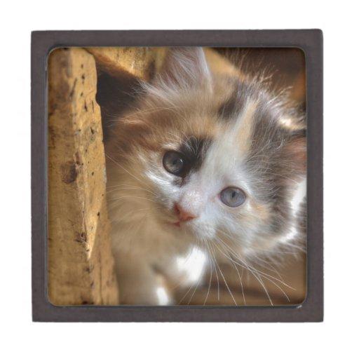 Gatito del calicó del Heterochromia Caja De Recuerdo De Calidad