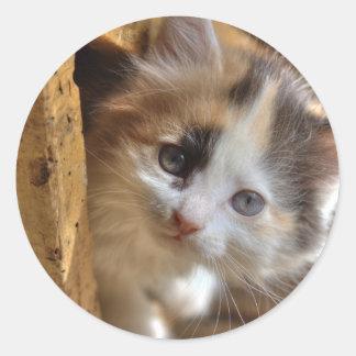 Gatito del calicó del Heterochromia Pegatina Redonda