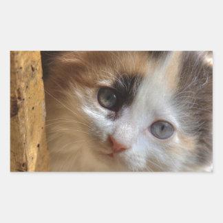 Gatito del calicó del Heterochromia Pegatina Rectangular