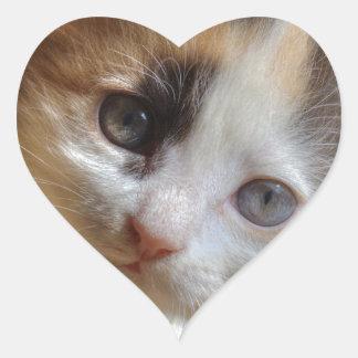 Gatito del calicó del Heterochromia Pegatina En Forma De Corazón