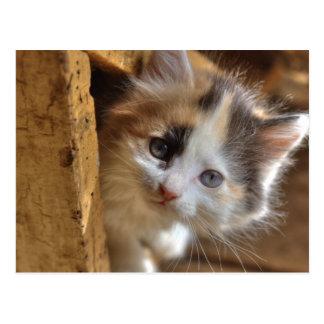Gatito del calicó del Heterochromia Postales