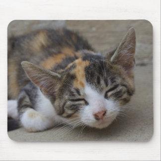 Gatito del calicó el Drowsing Mousepads
