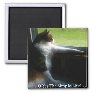 Gatito del calicó la vida simple imán cuadrado