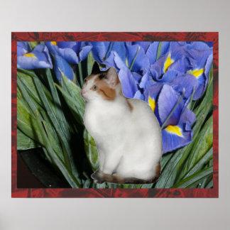 Gatito del calicó póster