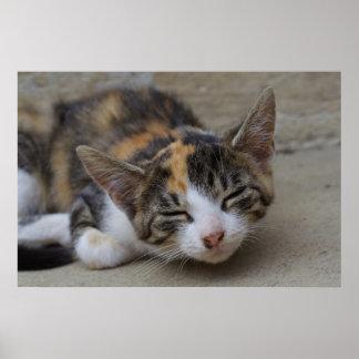 Gatito del calicó que dormita póster
