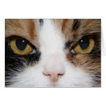 Gatito del calicó tarjetón