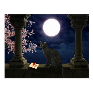 Gatito del claro de luna postales