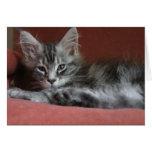 Gatito del Coon de Maine, un puss joven soñoliento Felicitacion