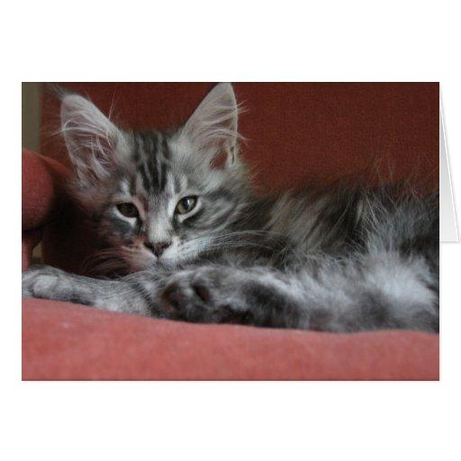 Gatito del Coon de Maine, un puss joven soñoliento Tarjeta De Felicitación