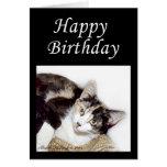 Gatito del feliz cumpleaños tarjetas