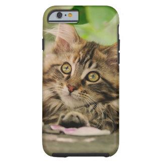 Gatito del gato de Coon de Maine del retrato, Funda Resistente iPhone 6