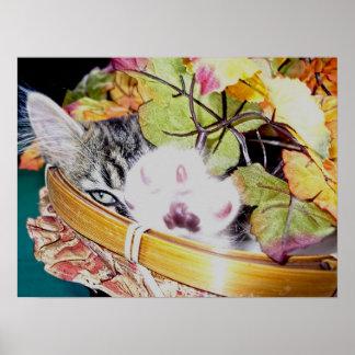 Gatito del gato del gatito de la acción de gracias poster
