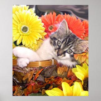 Gatito del gato del gatito de la diversión que mir posters