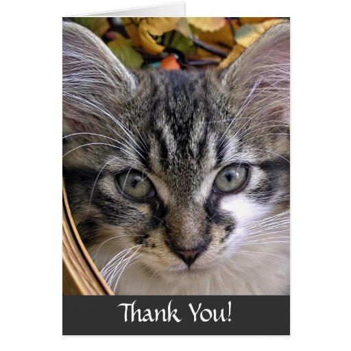 Gatito del gato del gatito del Coon de Maine de la Tarjeta De Felicitación