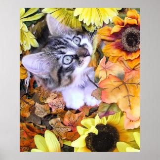 Gatito del gato del gatito del Coon de Maine que j Posters