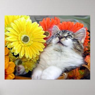 Gatito del gato del gatito, flores de la caída y G Poster