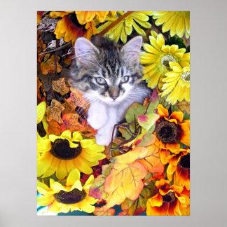 Gatito del gato del gatito que mira para arriba, c poster