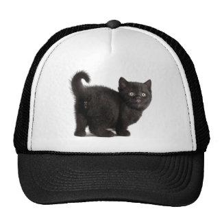 Gatito del gato gorros