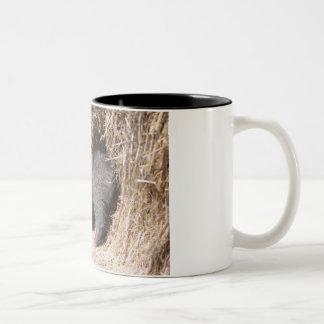 Gatito del granero taza de dos tonos