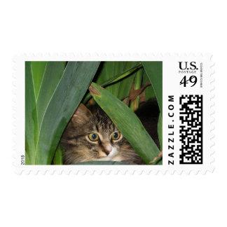 Gatito del jardín timbres postales