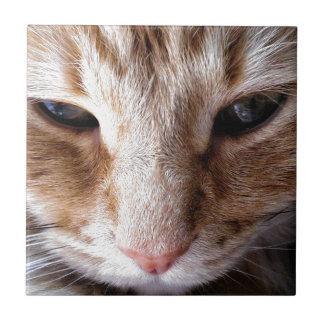 Gatito del jengibre azulejo cuadrado pequeño