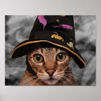Gatito del mago póster